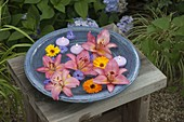 Blue bowl with flowers of Lilium asiaticum (lily), calendula