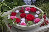 Flowers of Rosa 'Santana' (climbing rose) and Renaissance 'Lea'