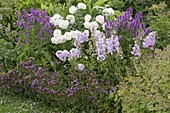Summer Bed, Rose Renaissance 'Nina' White, strong scent