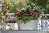 Tin box with balcony tomatoes 'balcony star', savory