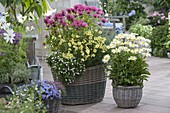 Baskets planted with perennials on the terrace