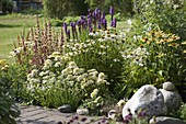Flowerbed with Echinacea purpurea 'Avalanche' white, 'Meringue' white filled