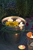 Abendliche Sommer - Terrasse mit Helianthus (Sonnenblumen)