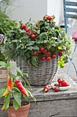 Basket with bush tomato 'Balkonstar', snack paprika 'Luigi f1'