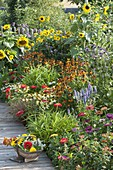 Colorful summer bed with Helianthus, Helenium