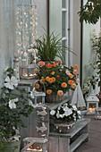 Abend - Terrasse mit Hibiscus syriacus 'Diana' (Weissem Roseneibisch)