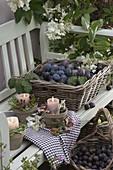 Small candlesticks with rosemary (Rosmarinus), blackberries