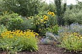 Plant cottage garden with shrubs and summer flowers bed