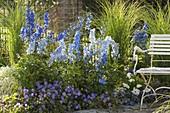 Blue bed of Delphinium (Delphinium), Geranium 'Rozanne'