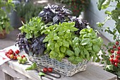 Different basil varieties in basket box