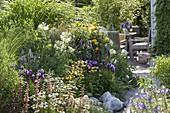 Agastache 'Summer Glow' 'Blue Fortune', Echinacea purpurea