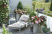 Metal containers on balcony, pink 'The Fairy', 'Heidetraum'