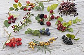 Wild fruits tableau