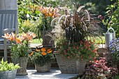 Baskets planted with Lilium 'Passion Ladylike', Carex morrowii