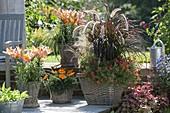 Körbe bepflanzt mit Lilium 'Passion Ladylike' (Lilien), Carex morrowii