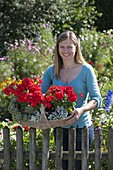 Gift basket with geraniums