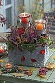 Calluna vulgaris (Bud flowering broom heath) in top basket