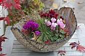 Cyclamen and Carex in hand-pottery bowl