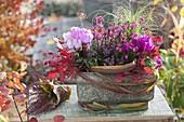 Herbstkasten mit Cyclamen (Alpenveilchen), Calluna Garden Girls