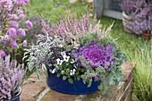 Brassica (Cabbage), Sage (Salvia), Calluna 'Garden Girls'