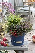 Emaillierter Eimer winterhart bepflanzt : Carex morrowii 'Ice Dance'