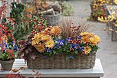 Basket with viola cornuta (horn violet), chrysanthemum