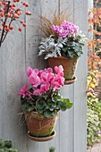Hand-made wall hanging pots with Cyclamen, Carex