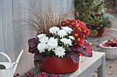 Red plastic bowl with chrysanthemum, Carex