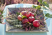 Apples, on wooden plate with Calluna vulgaris