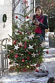 Young woman decorates Abies nordmanniana with apples