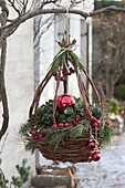 Hanging basket planted with Gaultheria procumbens