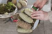 Christmas star in pine cone vase