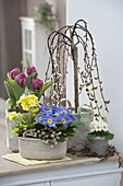 Spring blooms and willow stems
