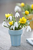 Small bouquet in doll dishes, Galanthus (snowdrop)