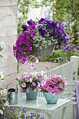 Basket with Petunia Calimero 'Blue' 'Purple' 'Pink', Perfectunia 'Candy'