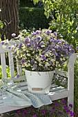 Emaillierter Eimer mit Kamille (Matricaria chamomilla), Blüten