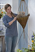 Plant nasturtium in home-made wicker hampers