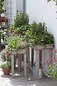 Plant planters at table height with strawberries and herbs