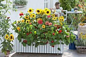 Plant mobile box with annual summer flowers
