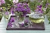 Tee aus wilder Malve (Malva sylvestris) und Zitronenthymian (Thymus