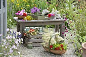 Bench with freshly harvested herbs on gravel terrace, roses