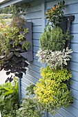 Vertical garden on the wall from the garden house
