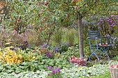 Chair under apple tree (malus) in the perennial border with alchemilla
