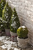 Evergreen trees packed winter-proof
