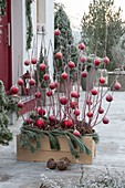 Wooden box planted with Cornus alba, decorated for Christmas