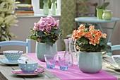 Table decoration with Begonia elatior 'Orania', 'Netja' (flowering begonia)