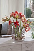 Modern Hippeastrum (Amaryllis) bouquets in large glass