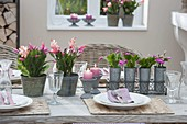 Winter table decoration with Schlumbergera (Christmas cactus)
