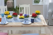 Table decoration with Primula acaulis in muesli bowls and enamel cups