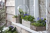 Spring on the windowsill: corn salad, cress